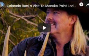 Colorado Buck at manuka point