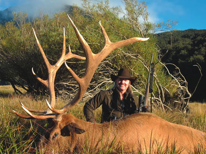 Elk Colorado Buck SCI 355