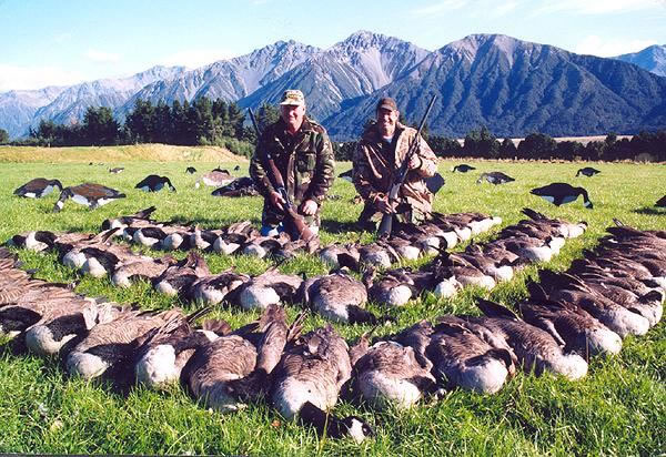 Geese Hunting in New Zealand Manuka Point Lodge 55 in 60 minutes
