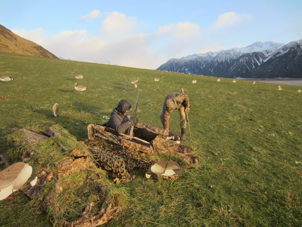 Layout blinds Canada Goose Hunting in New Zealand