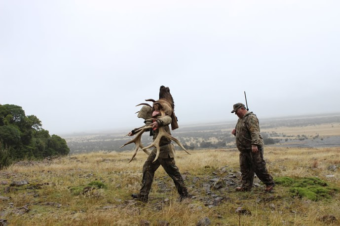 Professional Hunter New Zealand Hunting